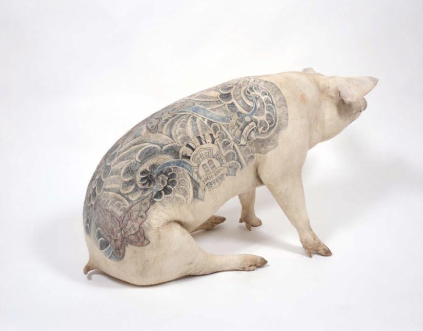 Tatouages sur cochons par Win Delvoye