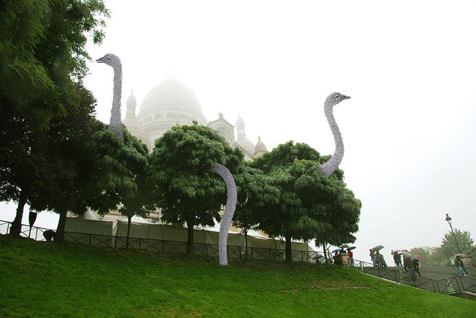 Les autruches de Montmartre vu par Tineke Meirink