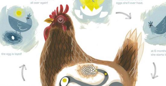 Cycle de reproduction d'une poule (cliquer pour voir en entier et en grand)